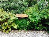 Vogeldrinkschaal op boomstam